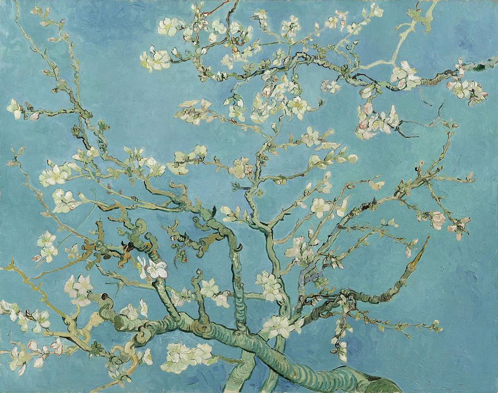 花咲くアーモンドの木の枝