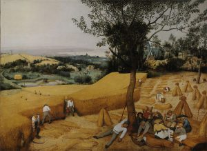 穀物の収穫