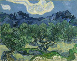 オリーブの林