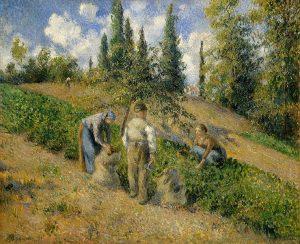 収穫、ポントワーズ