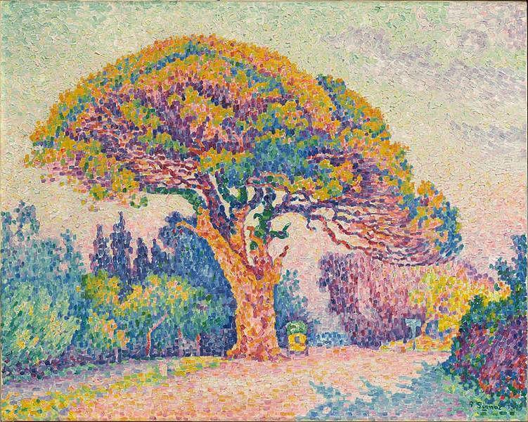 サン=トロペの松の木