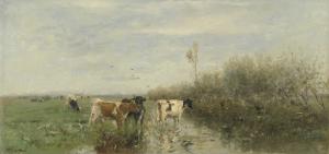 湿った牧草地の牛たち