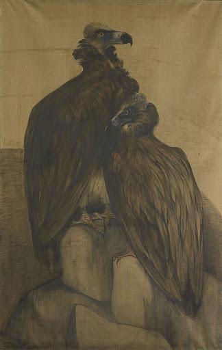 二羽のアラビアのハゲワシ
