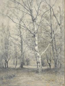 樺の木の森