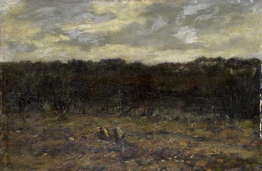荒野の子豚