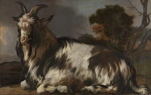 横たわる山羊