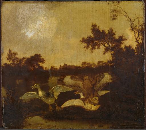 二羽のアヒルを攻撃しているノスリ