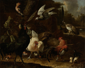公園の鳥たち