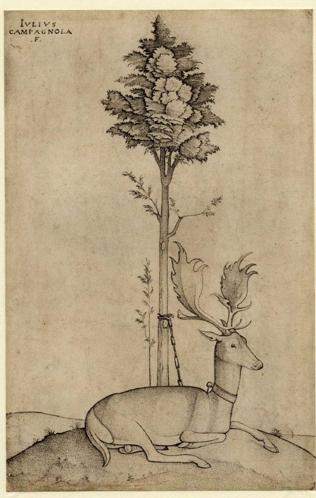 木に繋がれた雄鹿